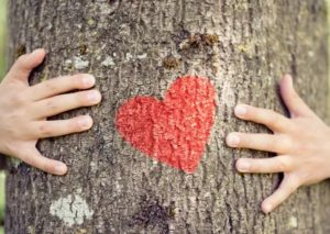 two hands pointing at a heart on a tree